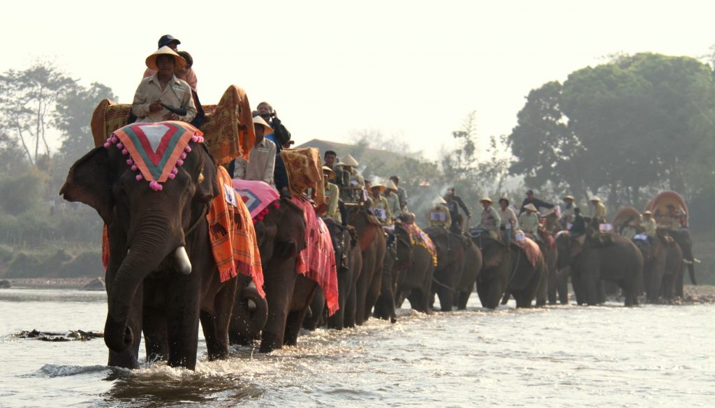 Laos elephants
