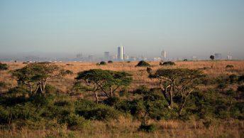 Kenya Business Export Links